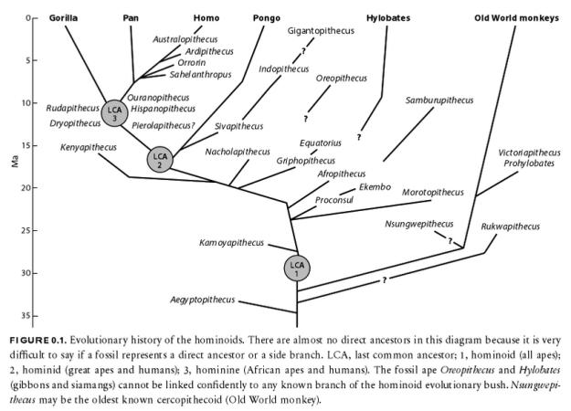 dryopithecus tree