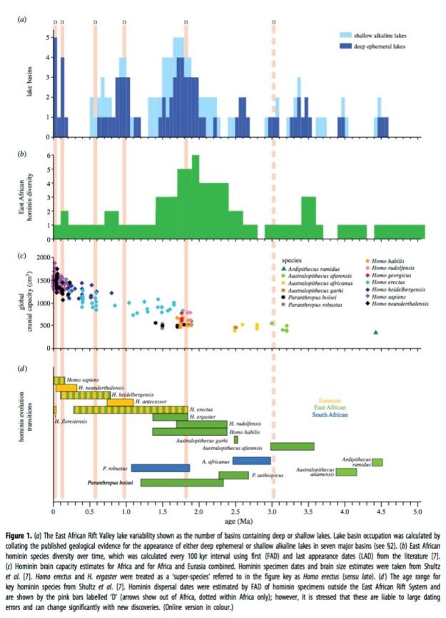 climate early homo maslin